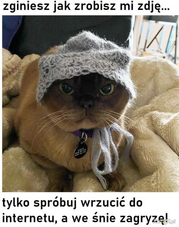 Ostatni krzyk mody w Internecie to czepki i czapki dla kotów! - Główni zainteresowani mają mieszane odczucia
