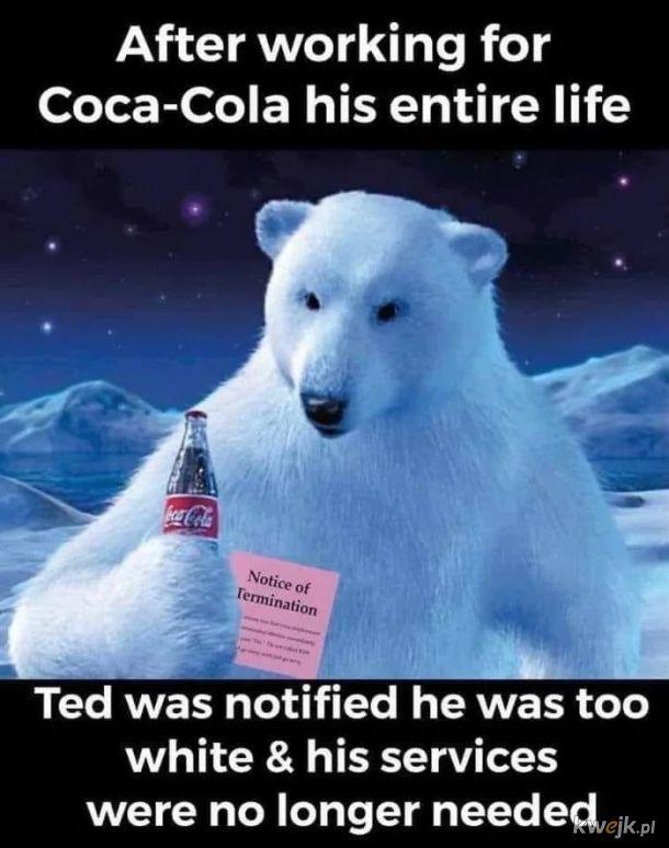 Biały miś Ted