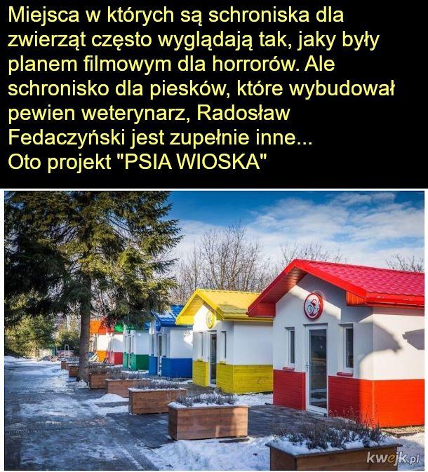 Na całym świecie robi się głośno o inicjatywie polskiego weterynarza