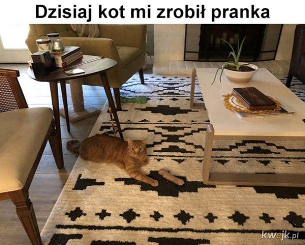 Sprankowany przez kota