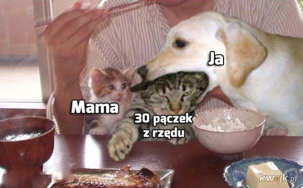 Memy o Tłustym Czwartku!, obrazek 7