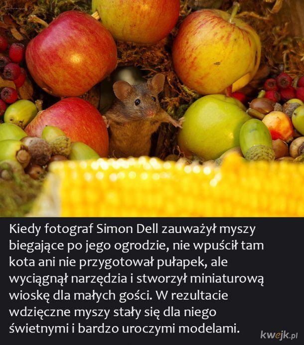 Fotograf zrobił zdjęcia małej mysiej wiosce