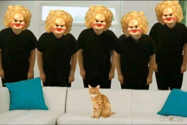 Na żywo grupowe głaskanie kota LIVE