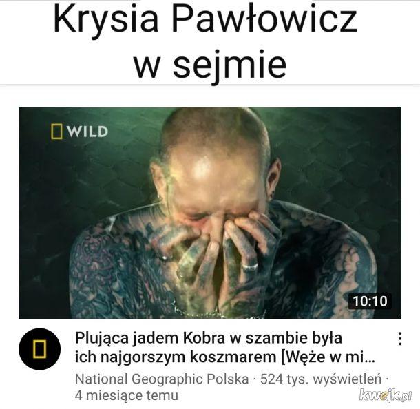 Kobra Pawłowicz