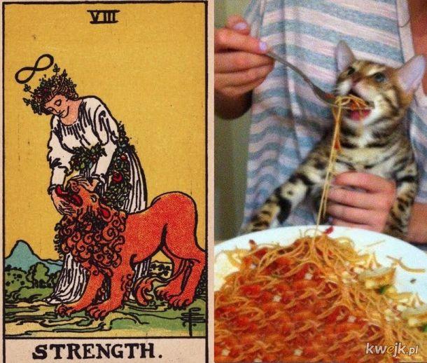 Gdyby koty były kartami tarota