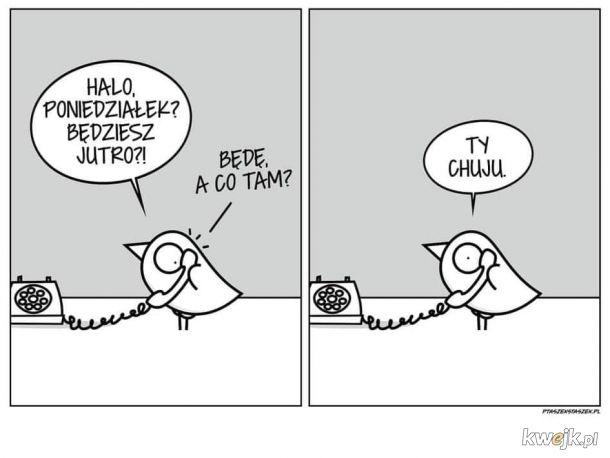 Ptaszek Staszek z RiGCZem