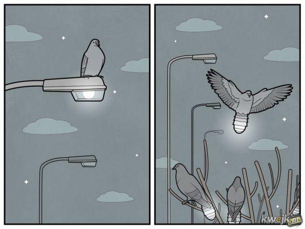Gołębie nocą