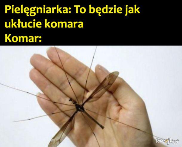 Ukłucie komara