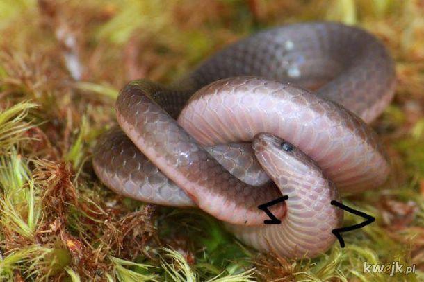 Węże z dorysowanymi rączkami, obrazek 21