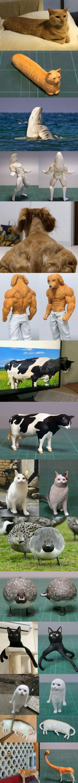 Wizualizacje memicznych zwierzaczków