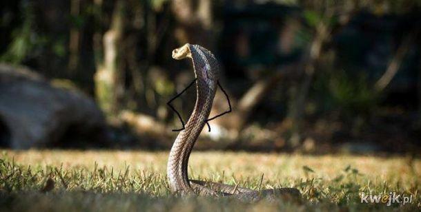 Węże z dorysowanymi rączkami, obrazek 15