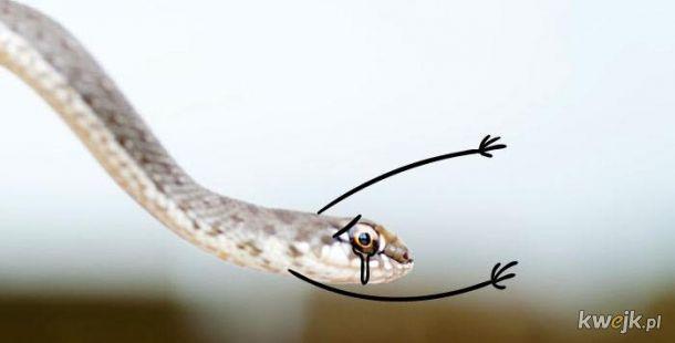 Węże z dorysowanymi rączkami, obrazek 16