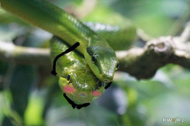Węże z dorysowanymi rączkami, obrazek 14