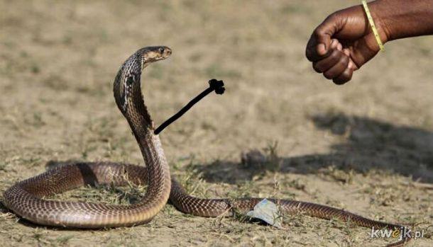 Węże z dorysowanymi rączkami, obrazek 8