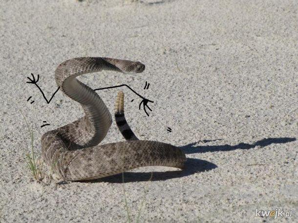 Węże z dorysowanymi rączkami, obrazek 20