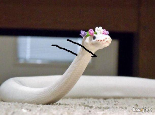 Węże z dorysowanymi rączkami, obrazek 10