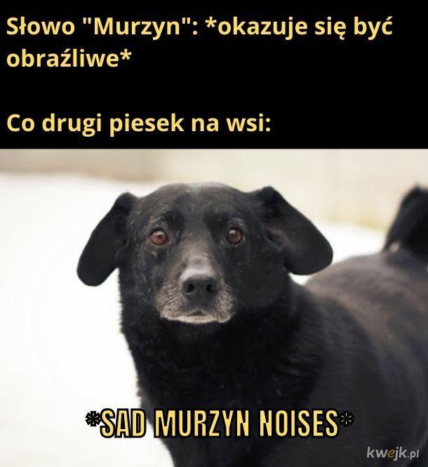 Piesek Murzyn