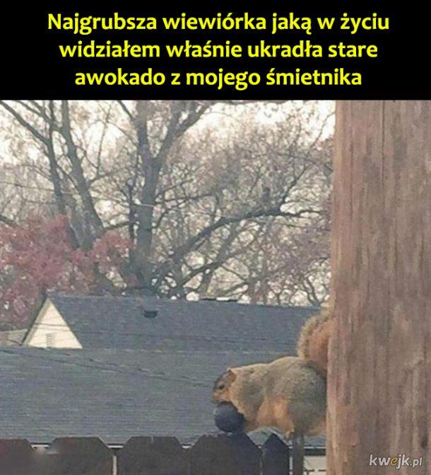 Wiewióreczka