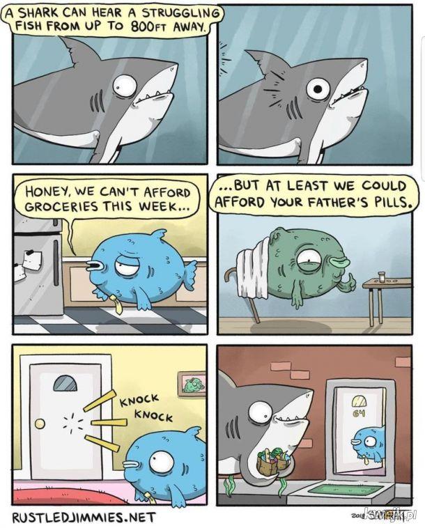 Słyszy i nie pozostaje obojętny - bądź jak ten rekin
