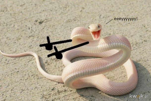 Węże z dorysowanymi rączkami, obrazek 2