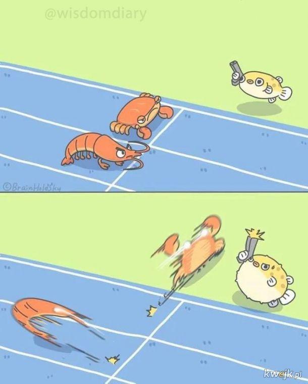 Do biegu i start!