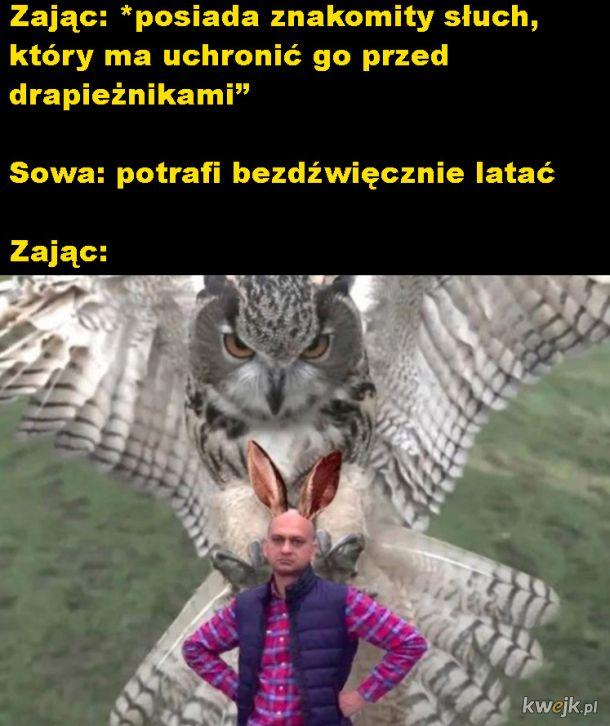 Zając i sowa