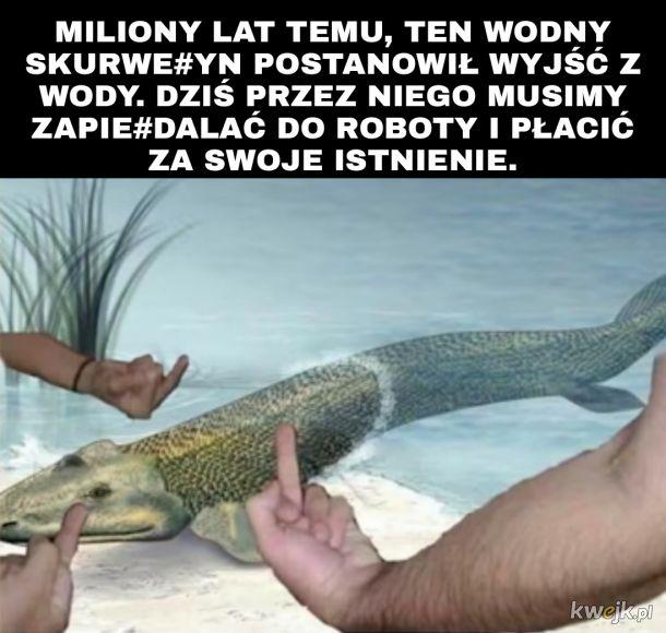 Ewolucja.
