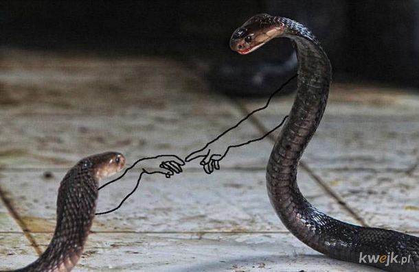 Węże z dorysowanymi rączkami, obrazek 12