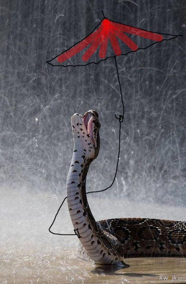 Węże z dorysowanymi rączkami, obrazek 6
