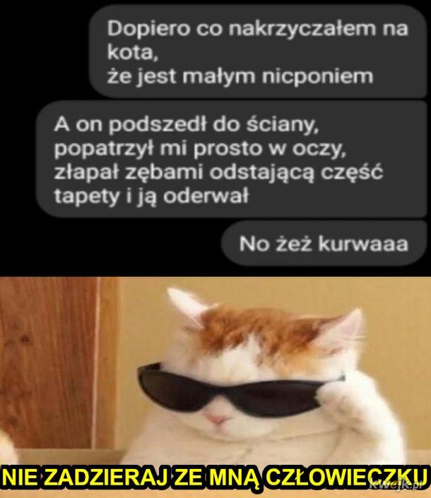 Pamiętaj, z kotem się nie zadziera