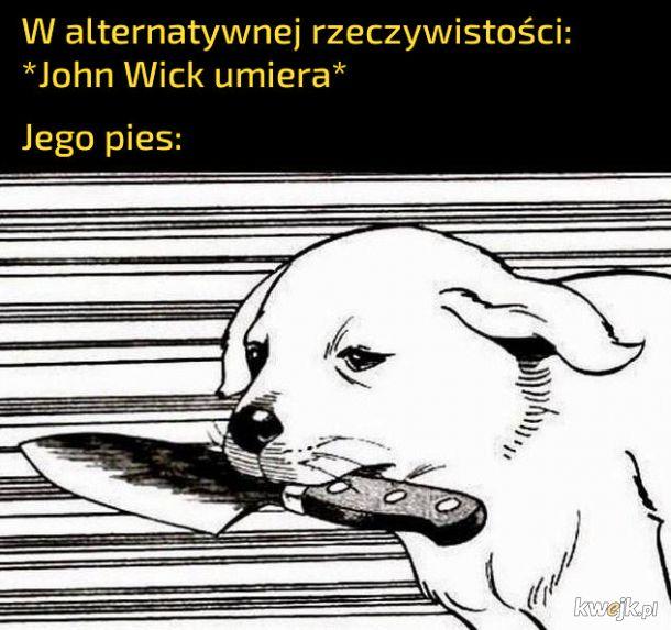 Pies Johna Wicka