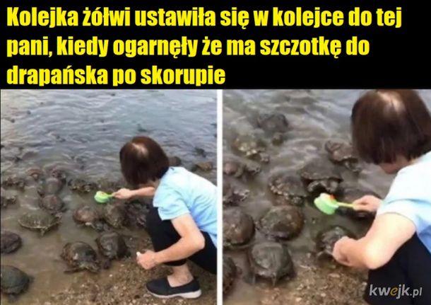 Żółwie lubią to