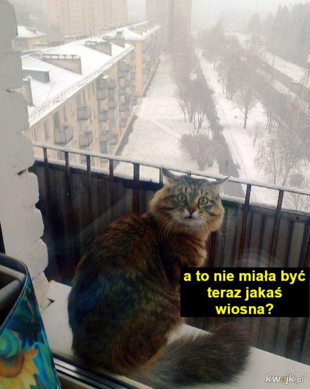 Halo, wiosna? Gdzie Ty?!
