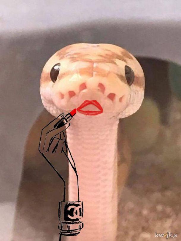 Węże z dorysowanymi rączkami, obrazek 3