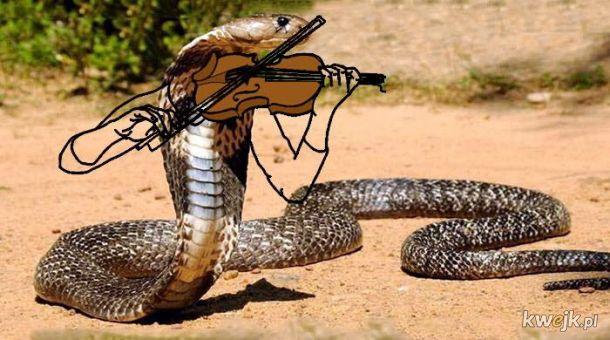 Węże z dorysowanymi rączkami, obrazek 17