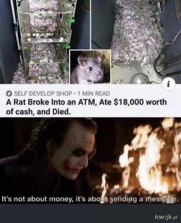 Szczur i pieniądze