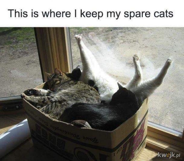 A czy Wy macie pudło z zapasowymi kotami?