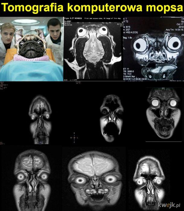 Tomografia komputerowa mopsa