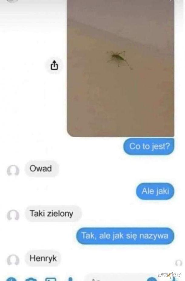 Kiedy Twoja laska znajdzie w domu owada.