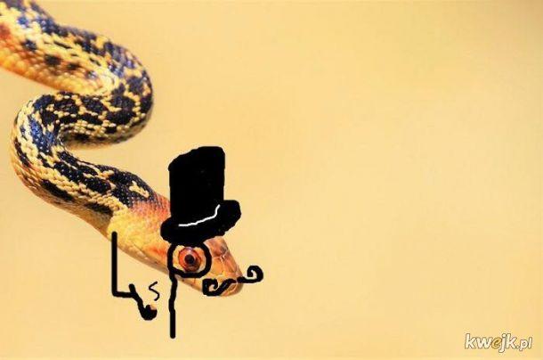 Węże z dorysowanymi rączkami, obrazek 11