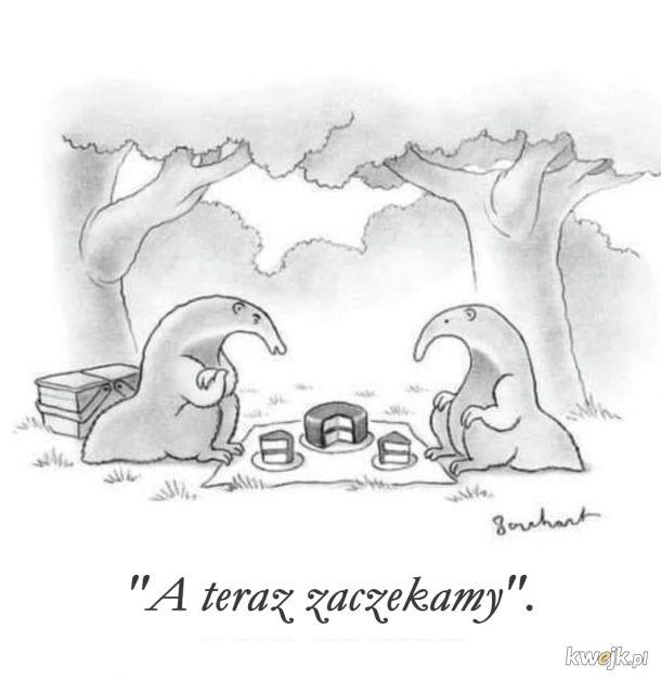 Taki sobie piknik