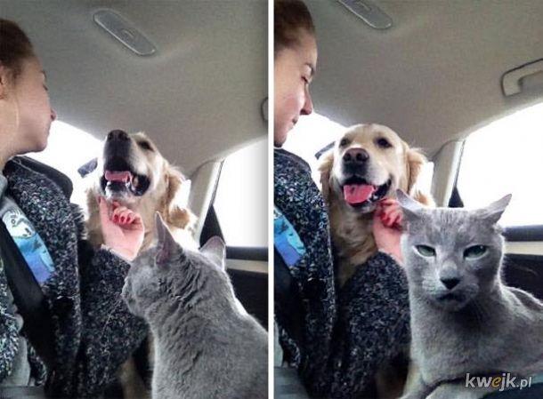 """""""Jak będziemy od małego wychowywać psa z kotem, to się dogadają"""""""