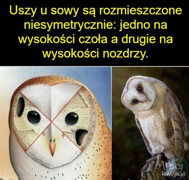 Ciekawostka ornitologiczna