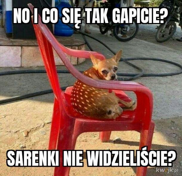 Sarenka ♥