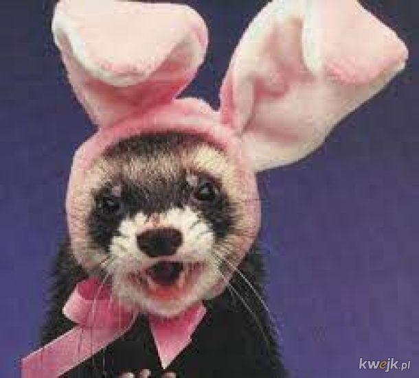 Zwierzaki z króliczymi uszami, bo jest Wielkanoc i to czas na zwierzaki z króliczymi uszami