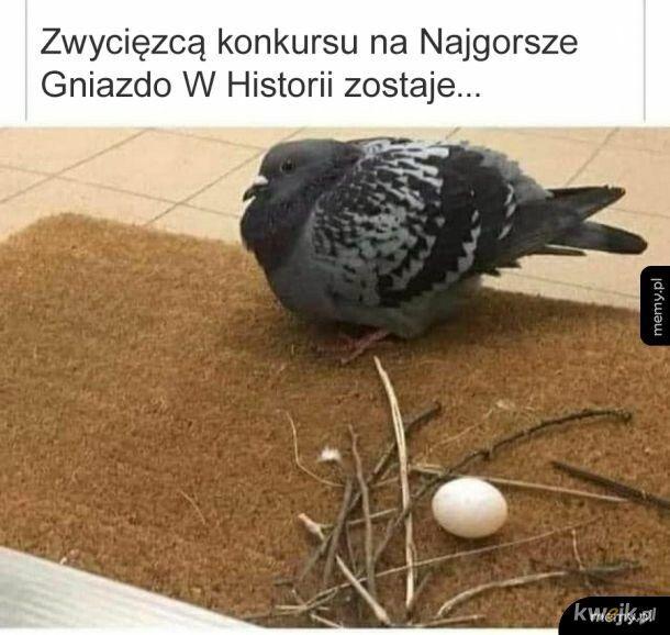 Gołębie są słodkie i leniwe