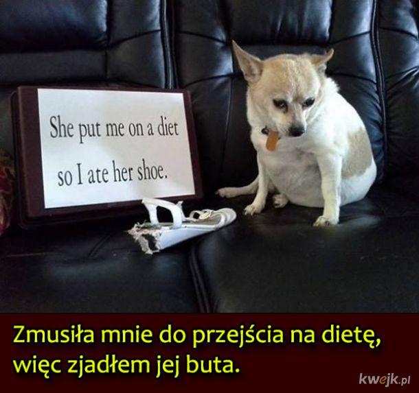 Psy, które były wyjątkowo niegrzeczne, obrazek 7