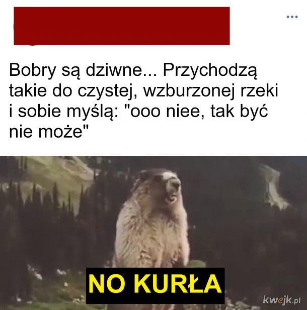 Bobery