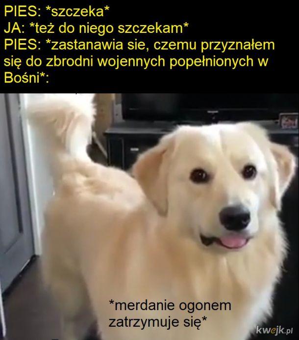 Pies i bełkoczący pan