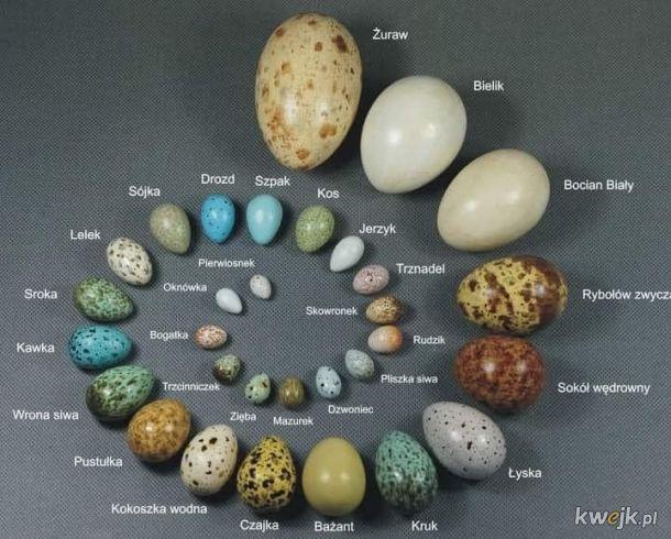 Ptasie jaja